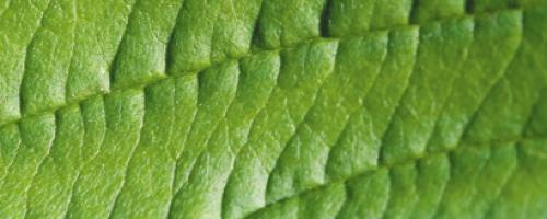 Leaf_Slide